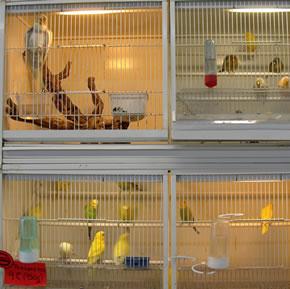 Pájaros en una tienda de animales