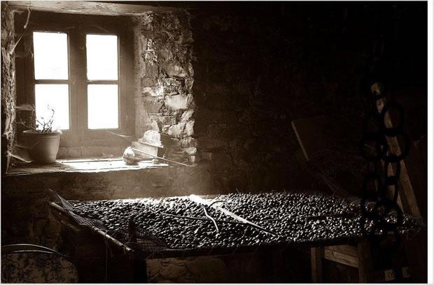 Secando castañas, de Francisco Oviedo Ares (Ponferrada
